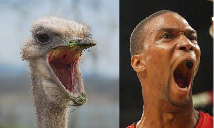 2013-06-14-boshostrichreal.png