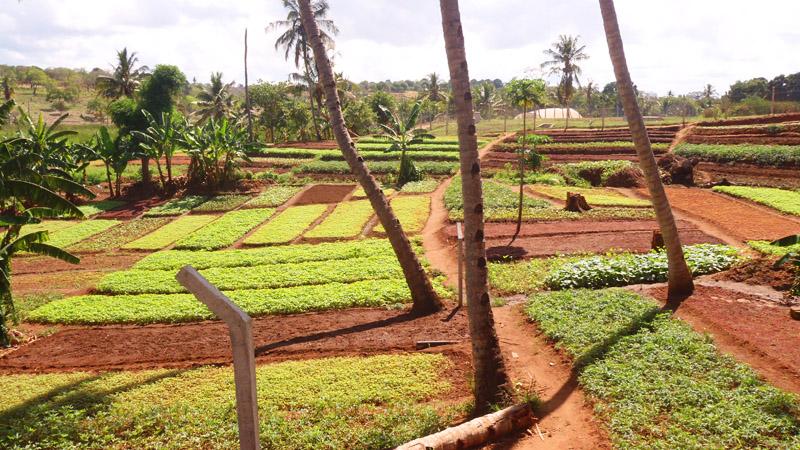 Normal farming at Mlandizi Tanzania