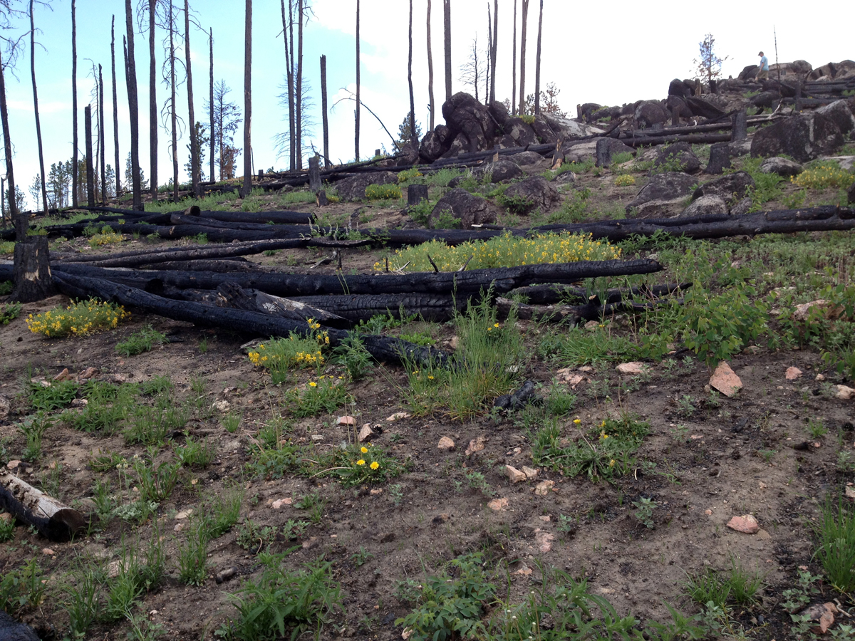Some remnants of Colorado's forest fires amid new blooms