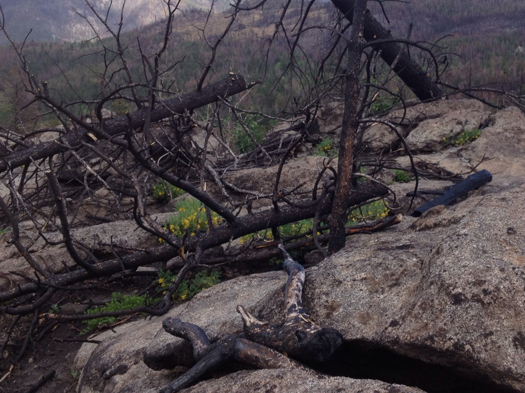Wildflowers bloom under tree scorched by forest fire
