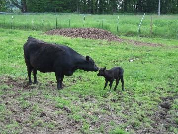 Hohen Bend Farm on HomeAway