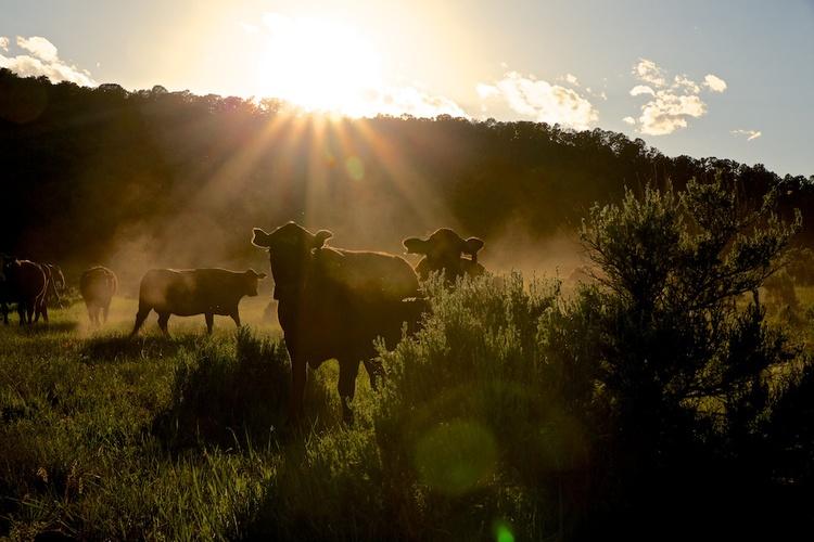 2013-06-24-cows.jpg