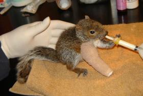 2013-06-25-Rescuedsquirrel280x189.png