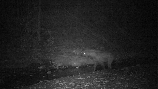 2013-06-27-Hyena.jpg