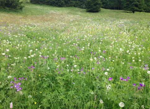 2013-07-02-WildflowersPM.png