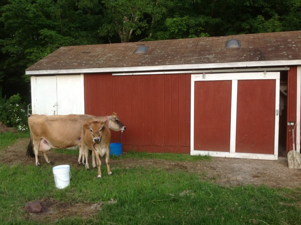 2013-07-05-MilkingShed.jpg