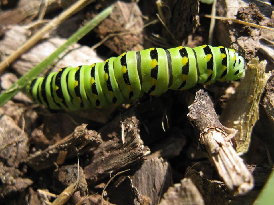 2013-07-05-monarch.jpg