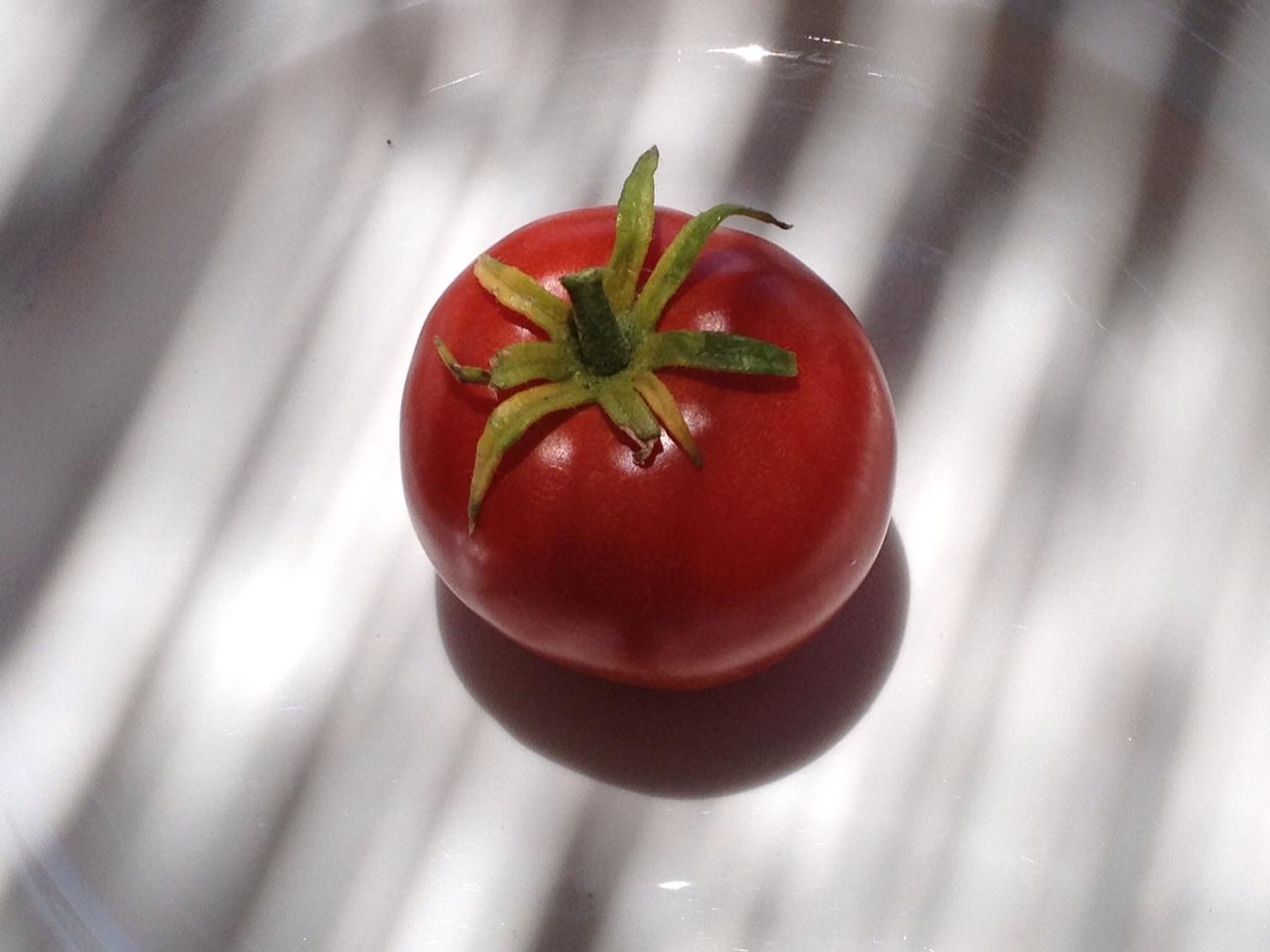 2013-07-08-tomato1.JPG