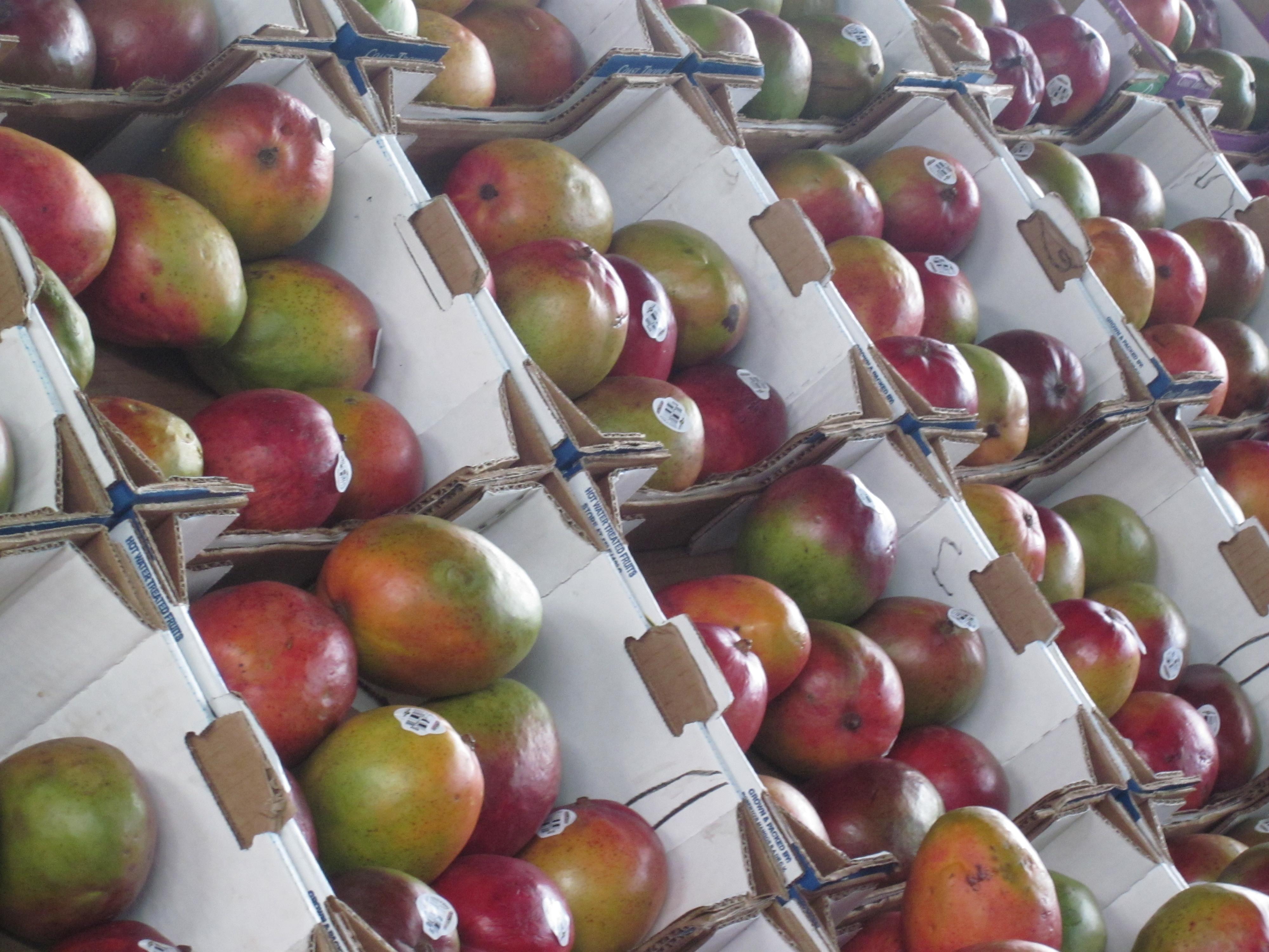 2013-07-09-mangoboxes.JPG