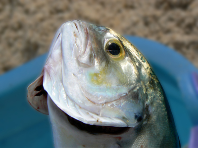 2013-07-10-freshfish.jpg