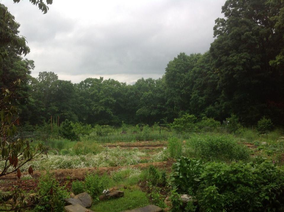2013-07-11-rainygarden2.jpg