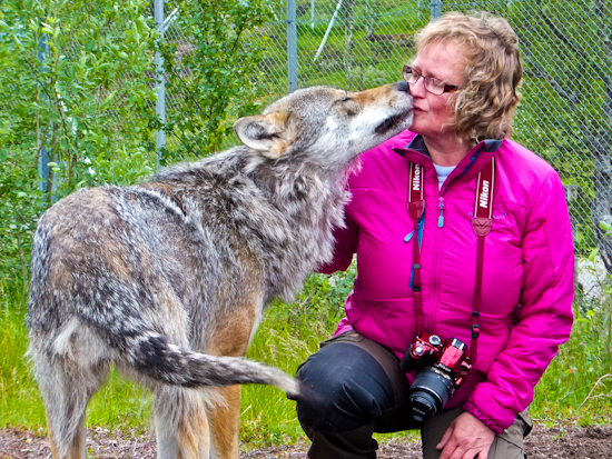 2013-07-16-Wolfkiss.jpg