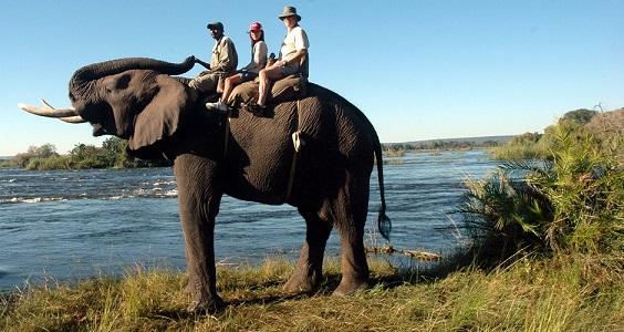 2013-07-17-ElephantBackSafarisAtVictoriaFalls_Resize.jpg
