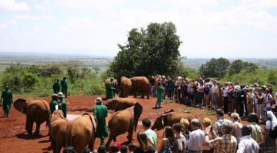 2013-07-17-KenyaSheldrickElephantOrphanageResize.jpg