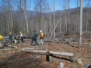 The American Chestnut Foundation, supported by the U.S. Forest Service, is working to bring back the American chestnut through a process called the backcross method. Pictured is a planting site. (U.S. Forest Service)