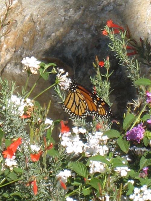 2013-07-20-Monarch.JPG