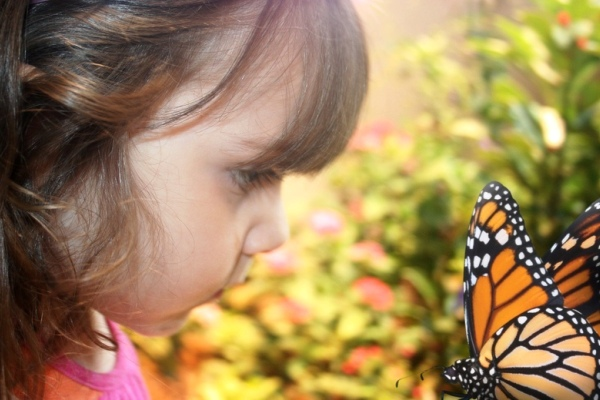 2013-07-24-Insect_ButterflyGarden_AudubonNatureInstitute.jpg