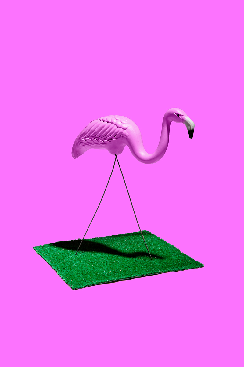 2013-07-24-flamingo.jpg