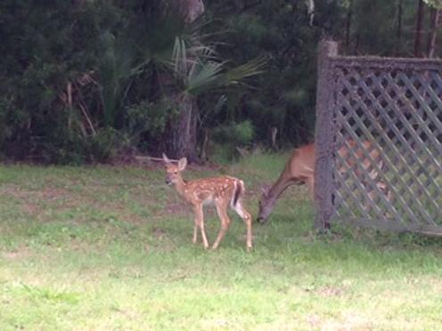 2013-07-31-Deer.jpg