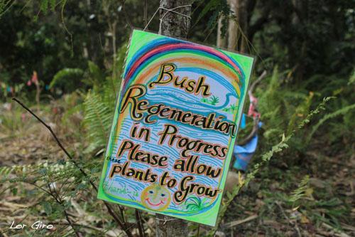 2013-08-02-Bushregeneration.jpg