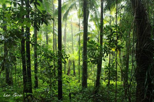 2013-08-02-Rainforest.jpg