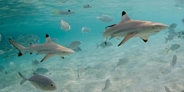 2013-08-02-sharksanctuary01.jpg