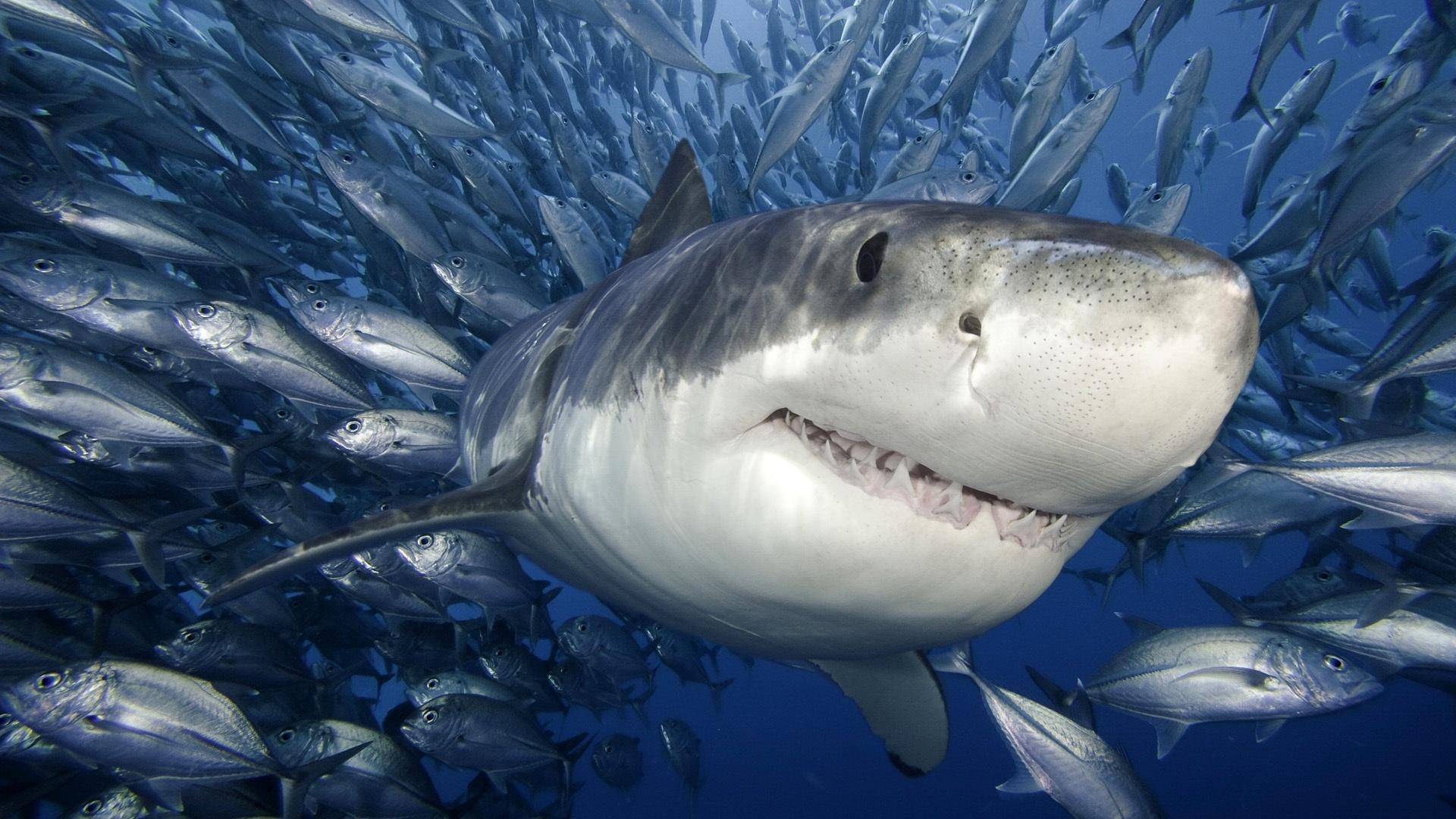 2013-08-06-shark.jpg