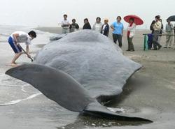 2013-08-09-whale.jpg