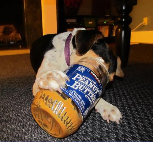 Dog Ate Corner Of Rug: 6 Gross Things My Dog Ate