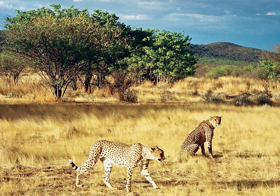 2013 08 12 MasaiMaraNationalParkKenya