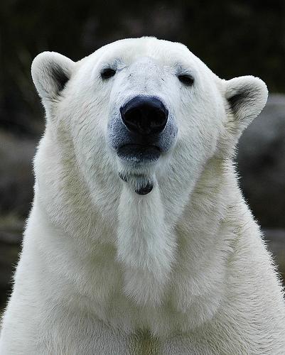 2013-08-15-polarbear.jpg