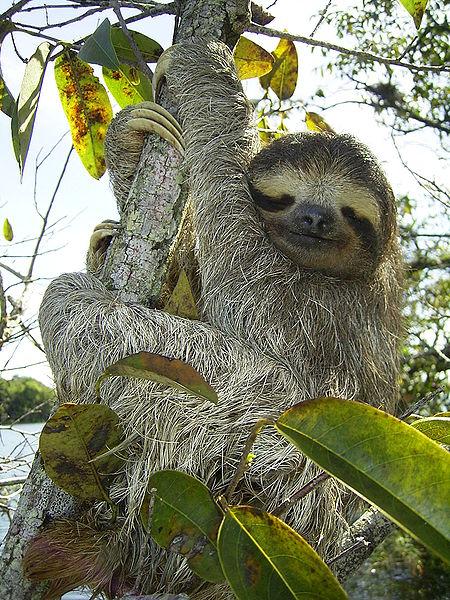 2013-08-15-sloth.jpg