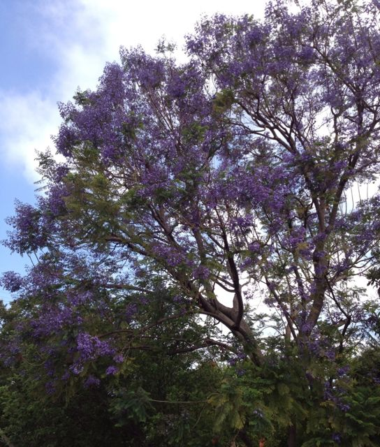 styled-inside-out-Jacaranda.jpg