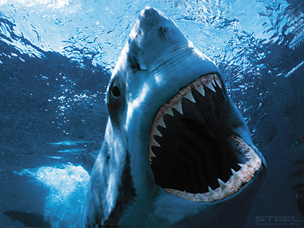 coming down from shark week facts behind the fear huffpost