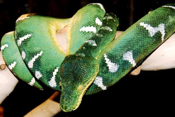 2013-08-20-Serpentariums_WashingtonSerpentarium_FCC_jcwinkler.jpg