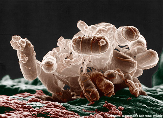 2013-08-21-ecolibacteria.jpg