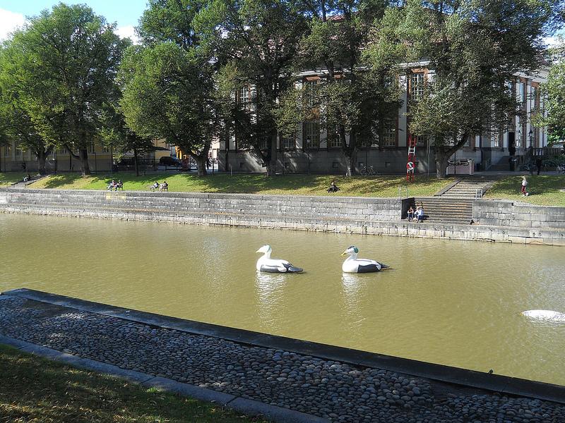 2013-08-26-ducksinTurku.jpg