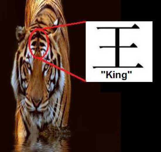 2013-08-26-tiger20symbolism.jpg