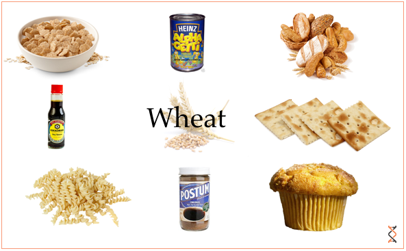 2013-08-27-Wheat21.png