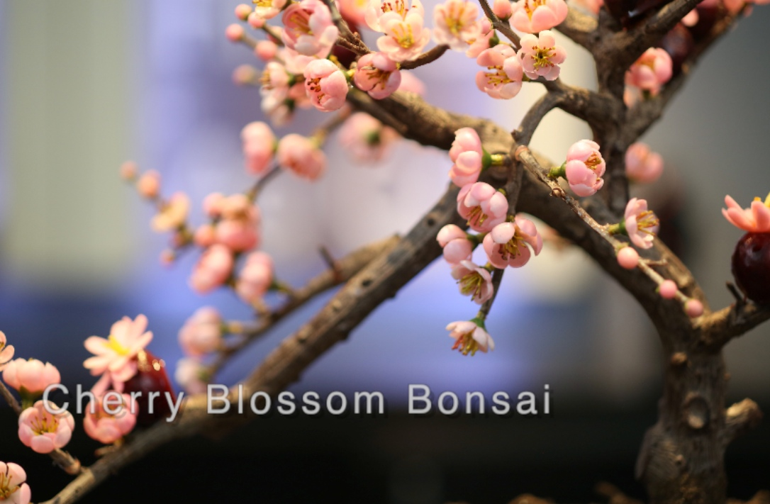 The Significance Of The Cherry Blossom From Beloved Tree To