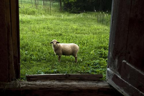 2013-08-29-farming3.jpg