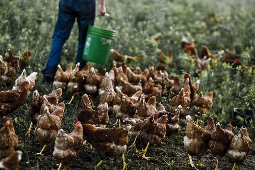2013-08-29-farming5.jpg