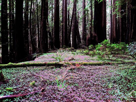 2013-08-30-HumboldtForest.jpg