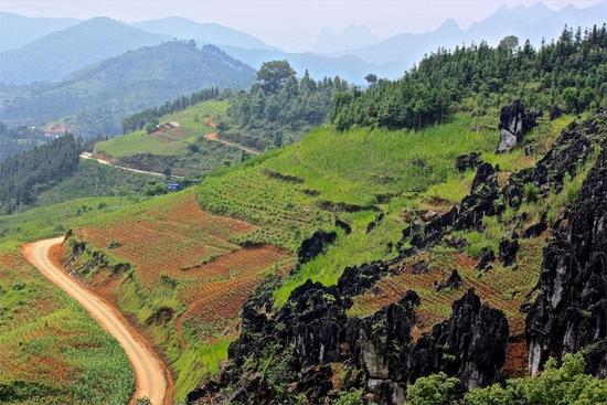 Rock forest in Northern Vietnam