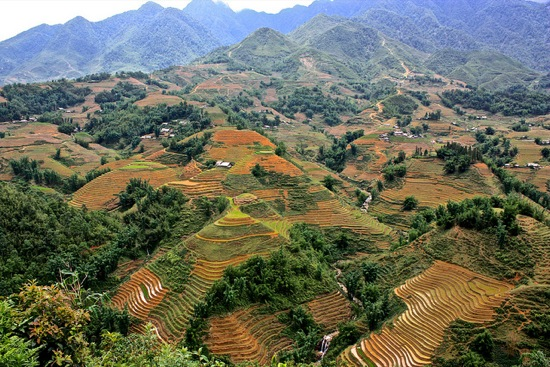 Wide view of Sapa's rice terraces
