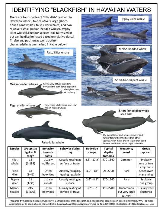 2013-09-02-CRCHawaiiBlackfishComparison1.JPG