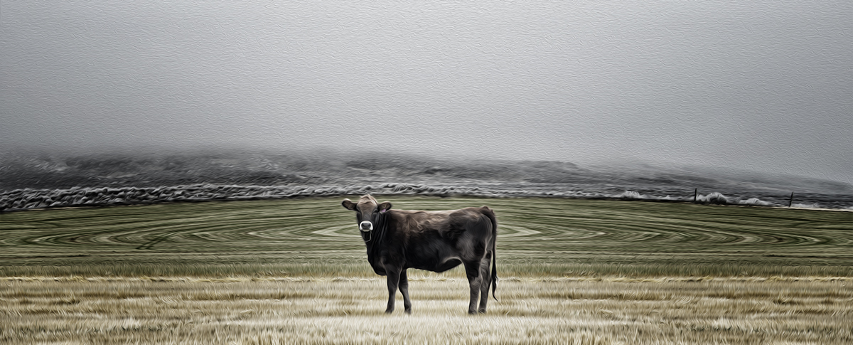 2013-09-03-Thecow.jpg