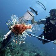 2013-09-03-divingforLionFishinBelize.jpg