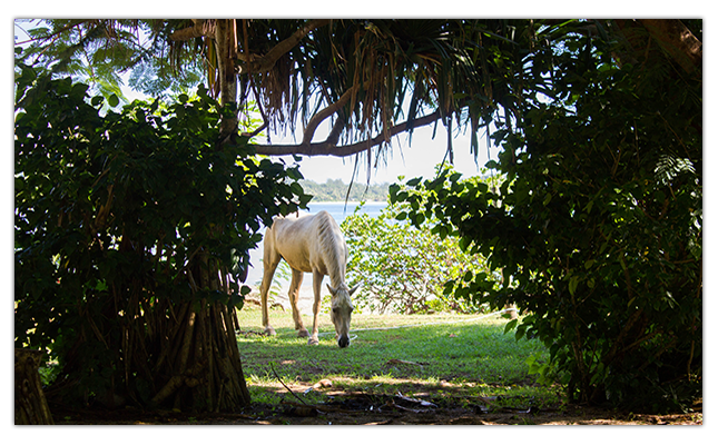 2013-09-03-horsegrounds.png