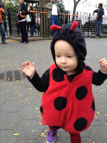 2013-09-04-ladybug.jpg